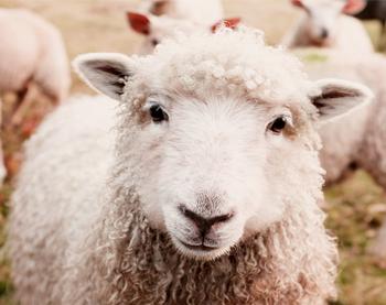 保定優尚羊絨制品有限公司